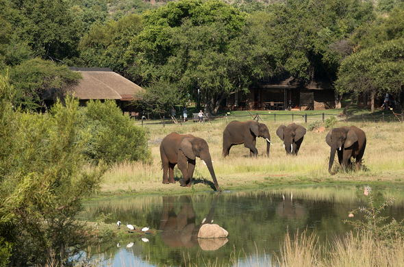 Elephant sighting in Pilanesberg National Park.