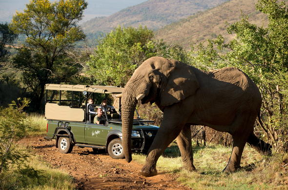 Elephant encounter in Pilanesberg National Park.